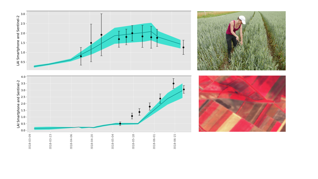 Figure 1. Biomass estimate in 2018 from Sentinel-2 (green) and from Fieldgreen smartphone camera application (black) for wheat (upper left) and corn (lower left), example of field measurement (upper right), and example of Sentinel-2 data (lower right).